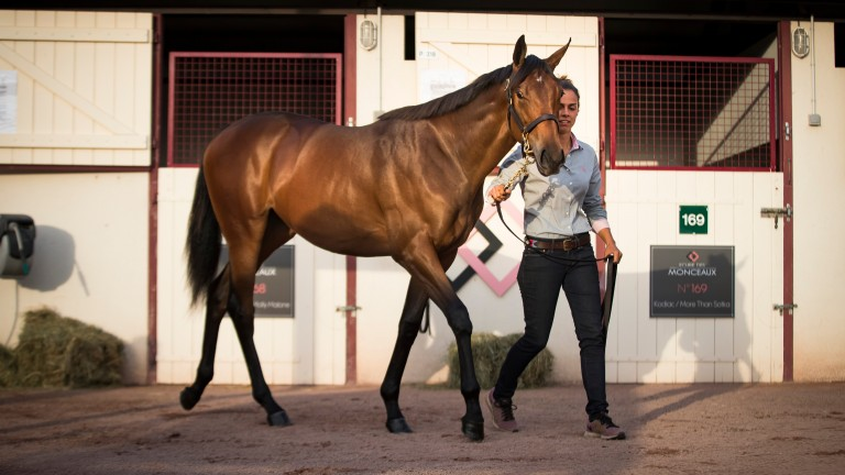 Heading home: American Pharoah x Marbre Rose filly purchased to race in the USA