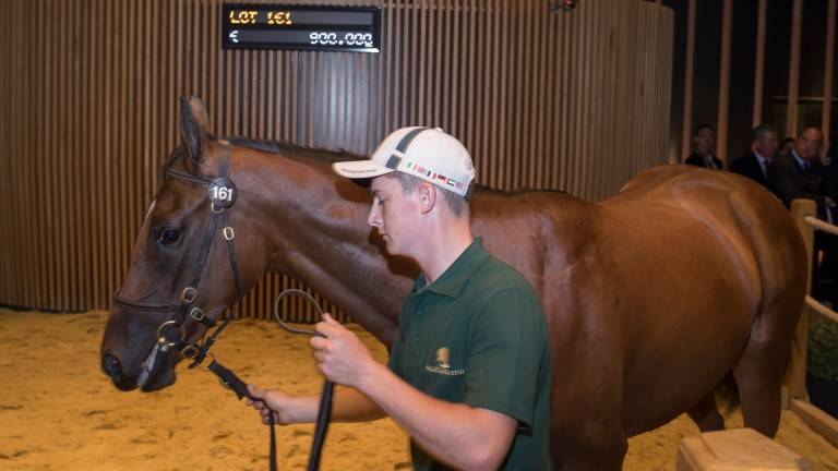 One for Godolphin: Invincible Spirit x Mayhem filly bought by Anthony Stroud