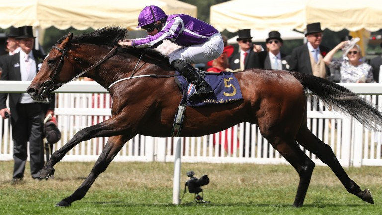 Kew Gardens: bids to enhance his St Leger claims in the Great Voltigeur