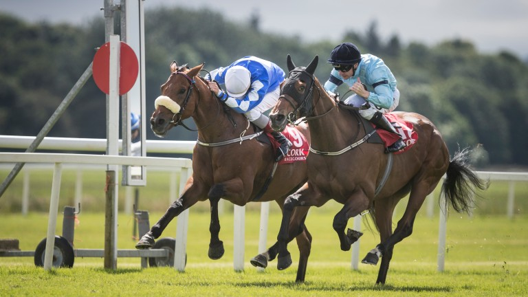 Sea The Lion: has blossomed with age and is a live chance for Saturday's Ebor