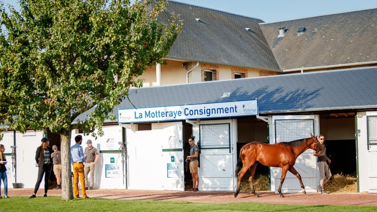 La Motteraye - consignors of the sale-topping Dubawi colt - will present yearlings at the v2 Sale