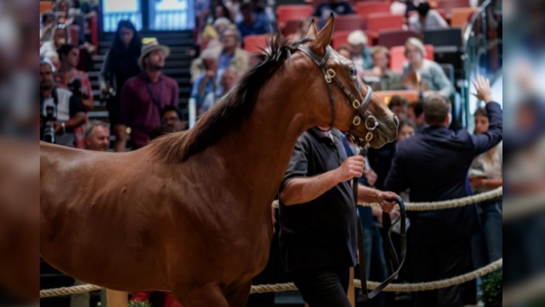 The Siyouni colt snapped up by Godolphin for €380,000