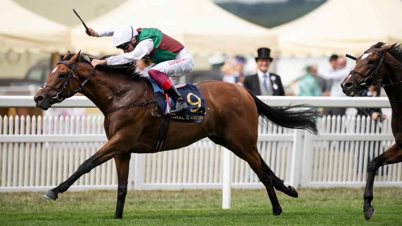 St james palace stakes bettingadvice spread betting forex strategies advanced