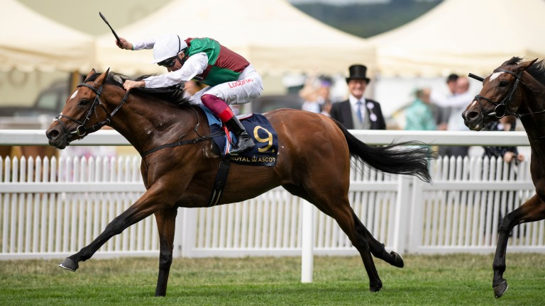 Without Parole: returning to stand at Newsells Park Stud