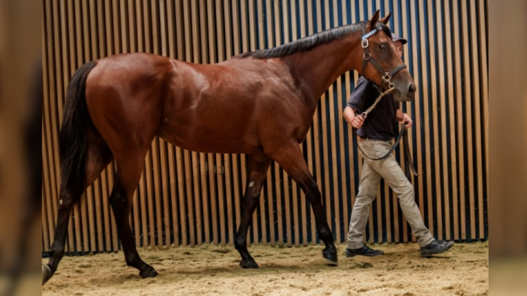 The show-stopping Anodin colt who went the way of Wertheimer et Frere