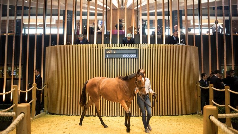 The first lot takes its turn in the Arqana sales ring