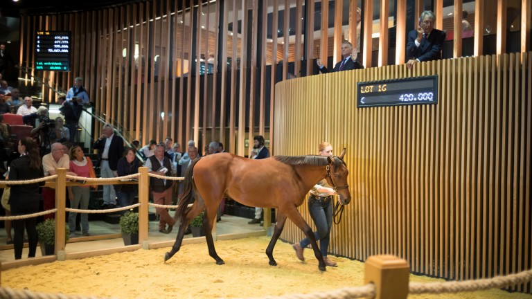 The Muhaarar colt out of Prudenzia sells to David Redvers for €420,000