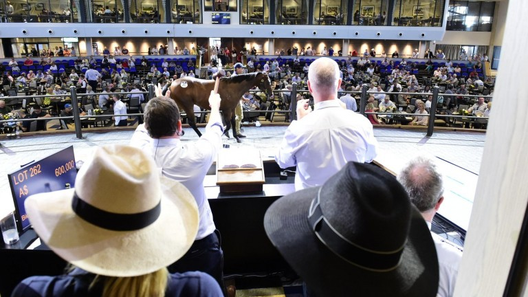 The 2019 Inglis Classic Yearling Sale will be extended to five days
