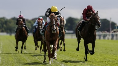 YORK, ENGLAND - AUGUST 24: Frankie Dettori riding Stradivarius (yellow cap) wins The Weatherbys Hamilton Lonsdale Cup at York Racecourse on August 24, 2018 in York, United Kingdom. (Photo by Alan Crowhurst/Getty Images)