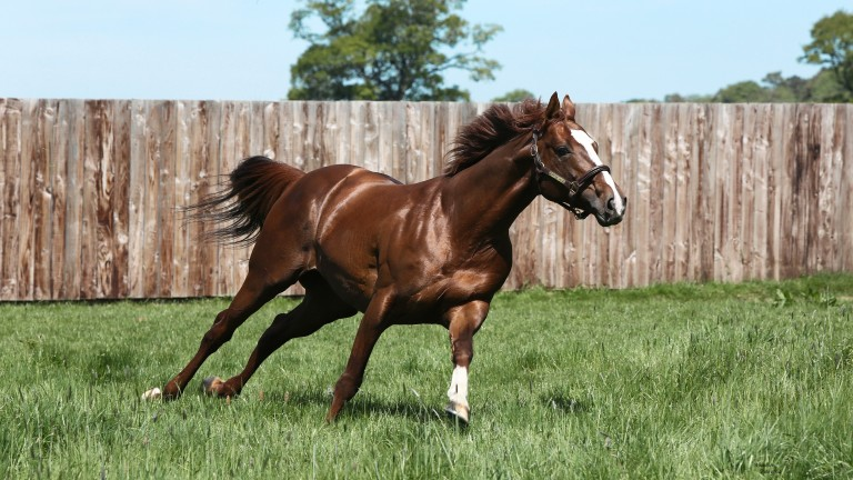 Lope De Vega: the Ballylinch Stud resident has now sired 24 Group winners