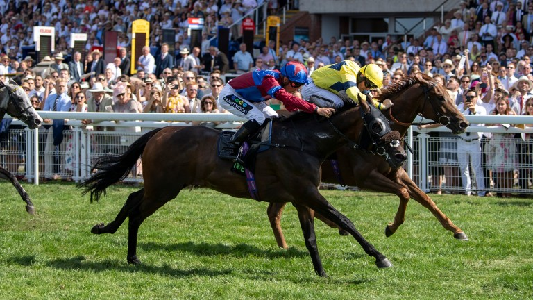 Gifted Master (nearest): wins the Stewards' Cup in August