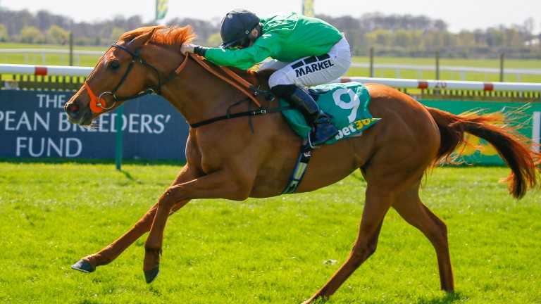 Anna Nerium: highest-rated in the Sceptre Stakes