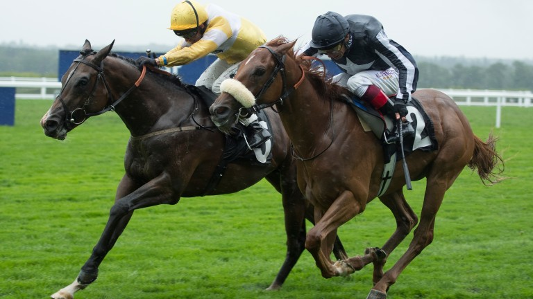 Raydiance (left) will be suited by ease in the ground at Ripon