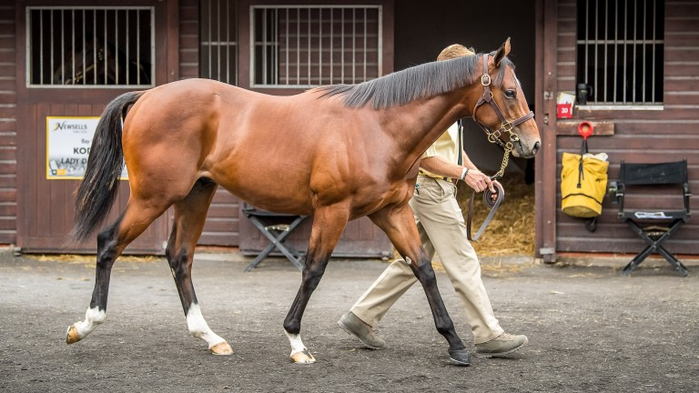 The sale-topping Gleneagles colt out of Lady Eclair fetched a record £380,000