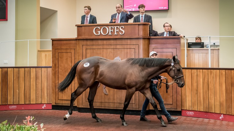 Lot 267: Acclamation filly ex Swiss Kiss topped the second day of the Premier Yearling Sale