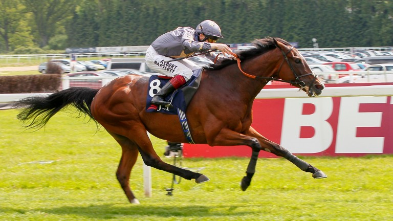 Mount Athos: finished third in the 2013 Melbourne Cup