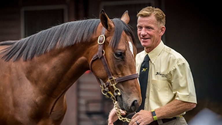 Newsells Park Stud yearling manager Gerry Meehan was a busy man this week