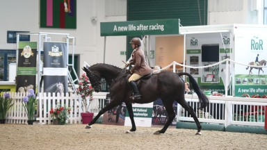 Don Cossack shows off his style at the Retraining of Racehorses Goffs UK National Championships