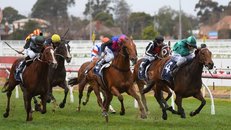 Humidor: won the Memsie Stakes