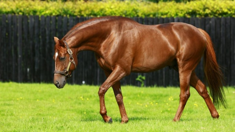 Australia: Coolmore resident now has seven first-crop winners to his name