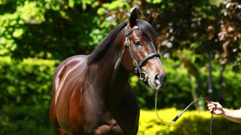 No Nay Never: has made an outstanding start at stud