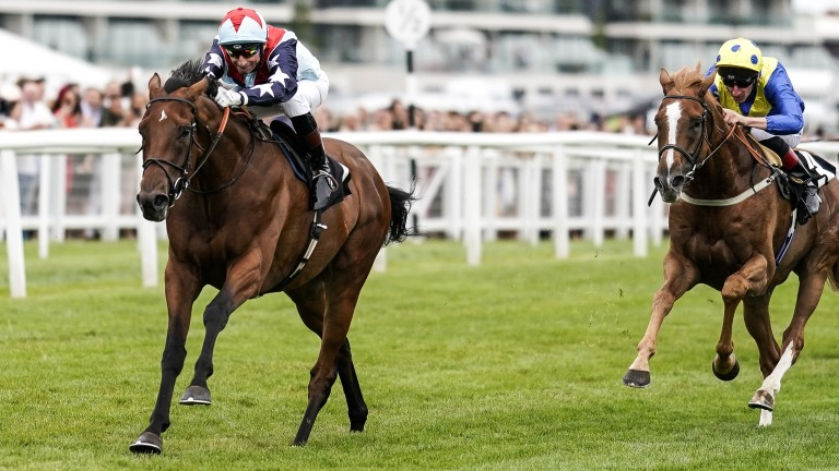 Sir Dancelot (left) goes to Haydock on Saturday bidding for a third successive victory