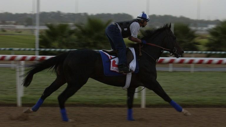 Medaglia D'Oro in his racing heyday, exercising at Nad Al Sheba