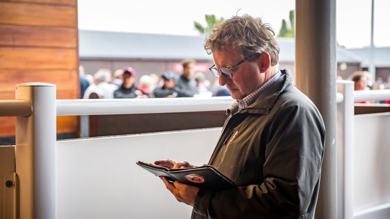 Mark Johnston examines the catalogue at the Goffs UK Premier Yearling Sale