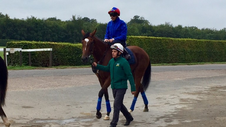 Enable and Frankie Dettori head to the Al Bahathri Polytrack this morning