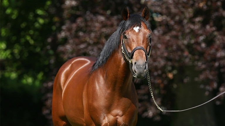 Anodin: sire of Tuesday's €115,000 top lot