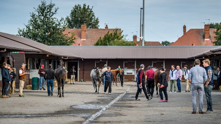 Goffs UK: the September horses in training sale takes place on September 19