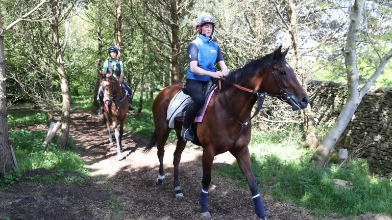 Laurens: to be ridden by Danny Tudhope