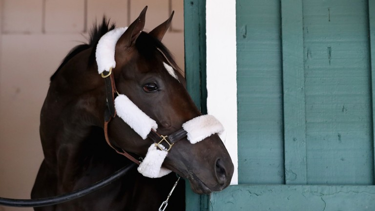 Always Dreaming: his $350,000 yearling price-tag attests to his good looks