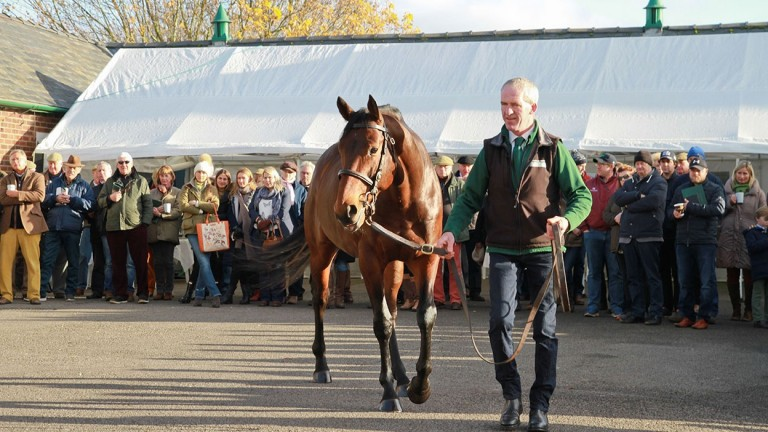 Sea The Moon wows the crowds at a Lanwades Stud open day
