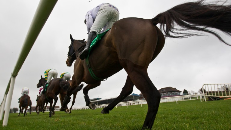 She's A Star: bids for the Ulster Cesarewitch under Jonathan Moore