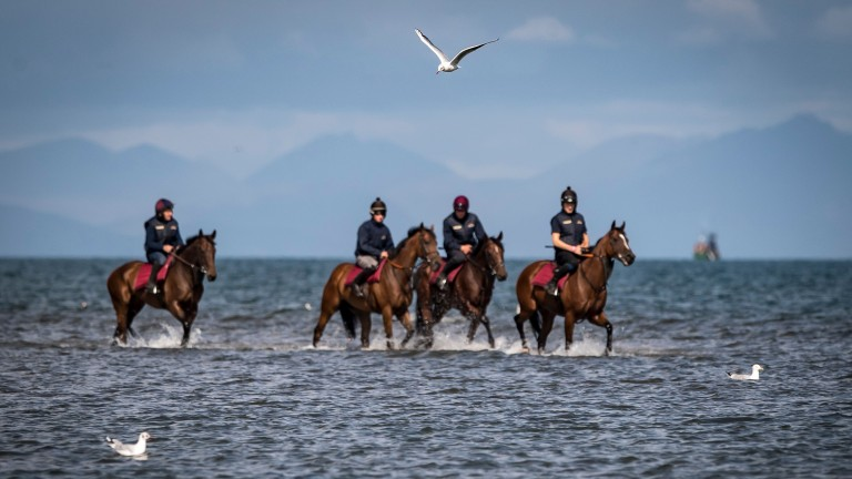 Locals are calling for a ban on horses, cars and dogs at Laytown beach