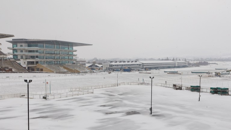 Cheltenham racecourse was covered in a blanket of snow in the weeks before the festival
