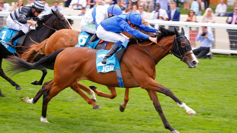 Ceratonia follows the path of half sister Wild Illusion when tackling the Group 3 Prix d'Aumale