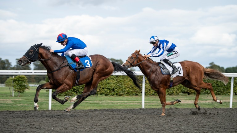 Junius Brutus chases home Kessaar in the Group 3 Sirenia Stakes at Kempton earlier this month