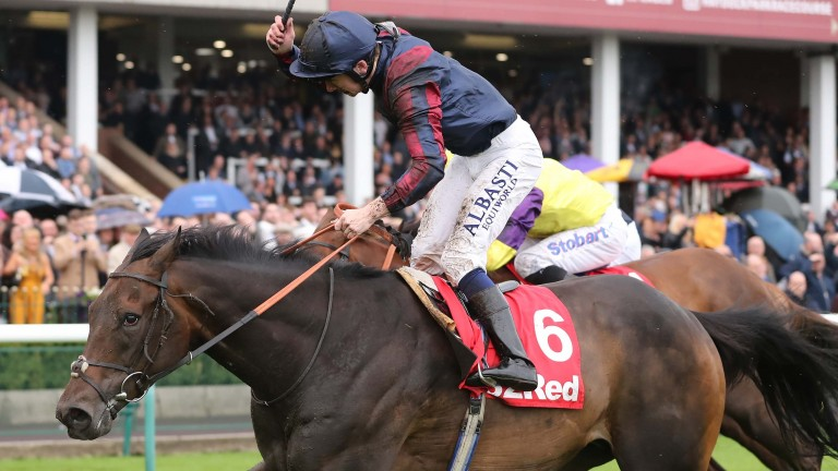 The Tin Man: a half-brother to another fine sprinter in Deacon Blues