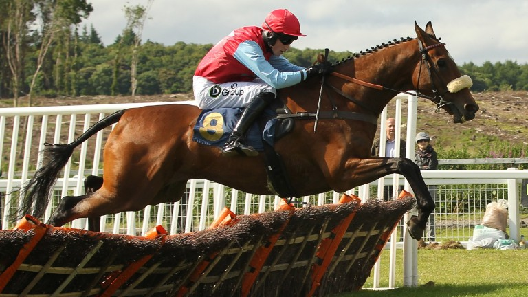Pair's talented half-brother Solway Dandy seen in action at Perth