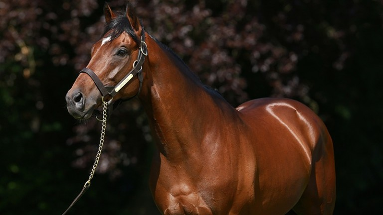 Anodin: yearlings have proved a hit at Arqana and Osarus this year