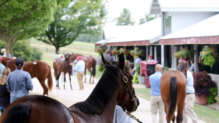 The Keeneland sales ground during drier times