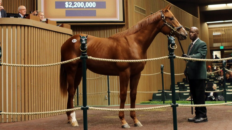Hip 91: the American Pharoah colt bought by Godolphin for $2.2 million