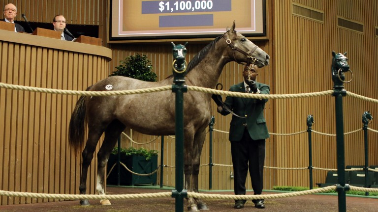 Hip 141: the Tapit half-brother to California Chrome brings a $1.1 million bid from MV Magnier