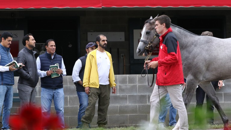 Sheikh Mohammed (yellow jacket) and entourage inspect the stock at Keeneland