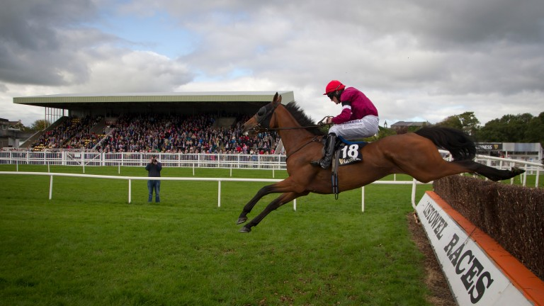 Rogue Angel won the Kerry National in 2015