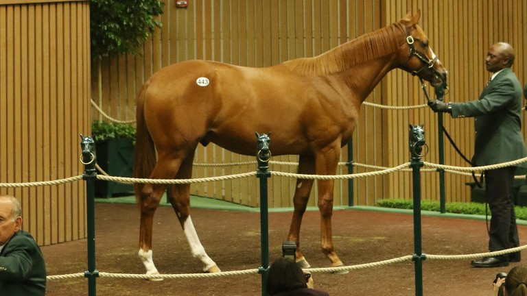 The Will Take Charge half-brother to Justify takes his turn in the ring