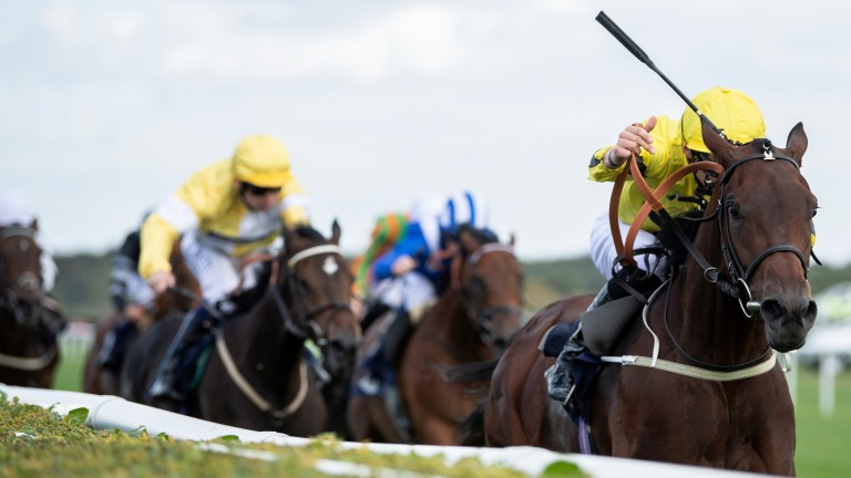 Drive Time: James Doyle pushes out Arctic Sound to win the nursery