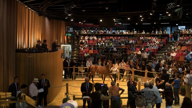 Arqana: 625 lots catalogued for the October Yearling Sale